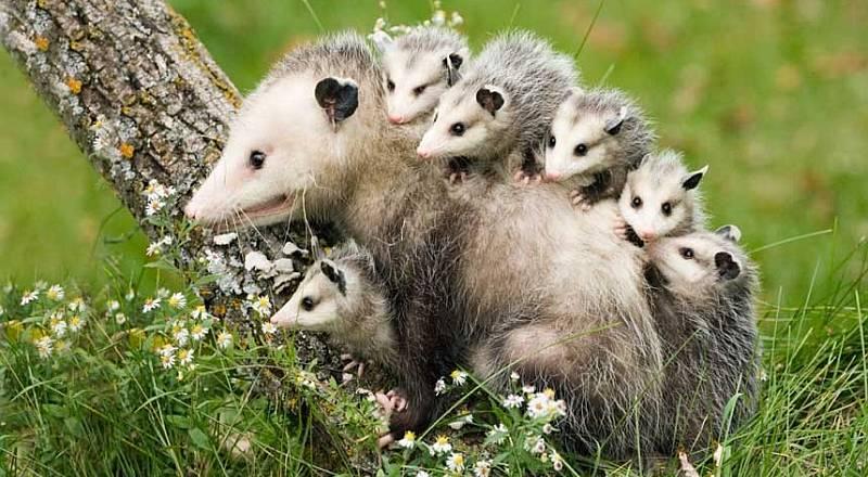 https: img-k.okeinfo.net content 2015 01 02 406 1087030 hewan-ikut-rayakan-tahun-baru-BTQJmcTqNu.jpg