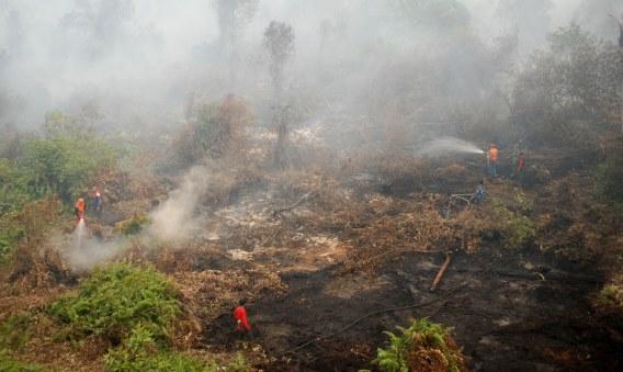 https: img-k.okeinfo.net content 2015 09 09 525 1211303 api-lahap-300-hektare-kawasan-suaka-margasatwa-cikepuh-rYIPp6fKKg.jpg