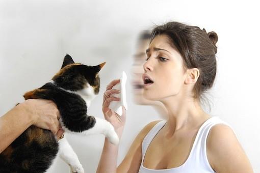 https: img-k.okeinfo.net content 2016 10 10 481 1510971 alasan-seseorang-bisa-alami-alergi-bulu-kucing-zdKDWbMnzk.jpeg