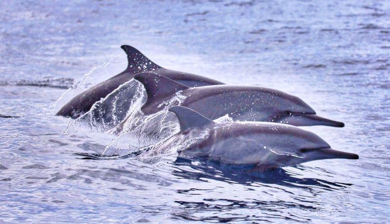 https: img-k.okeinfo.net content 2016 12 16 406 1568448 menyedihkan-lumba-lumba-ini-dipaksa-lompati-api-57s65h3B5s.jpg