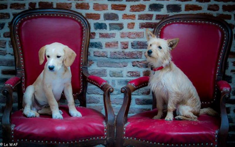 https: img-k.okeinfo.net content 2016 12 25 298 1575312 serunya-bermain-bersama-anjing-sembari-seruput-kopi-di-cafe-unik-ini-xahTuuu7I8.jpg