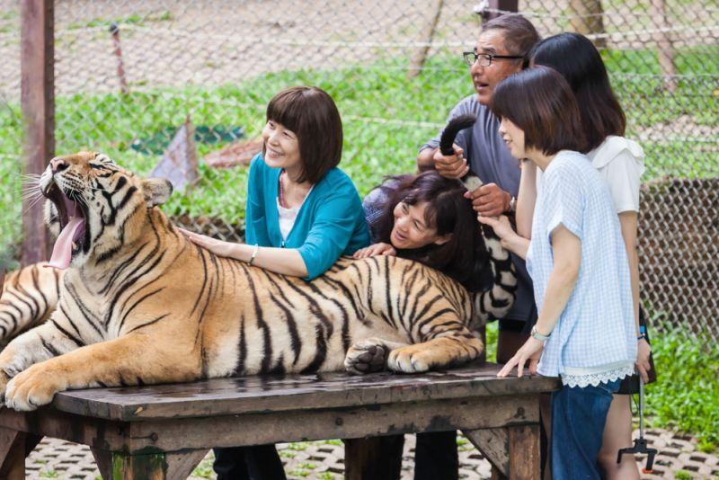 https: img-k.okeinfo.net content 2017 03 16 406 1644142 siswi-tk-diterkam-harimau-ini-tips-aman-ajak-anak-ke-kebun-binatang-ibWJz1dR0X.jpg