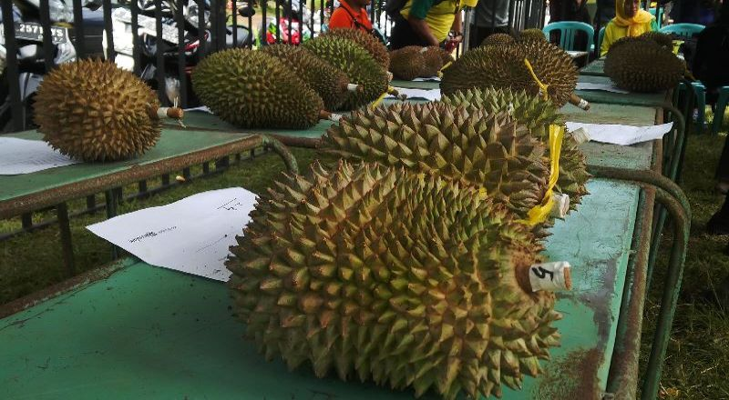 https: img-k.okeinfo.net content 2017 04 09 320 1662885 business-hits-dapat-belasan-juta-rupiah-dari-lempok-durian-hLkS9ospHC.jpg