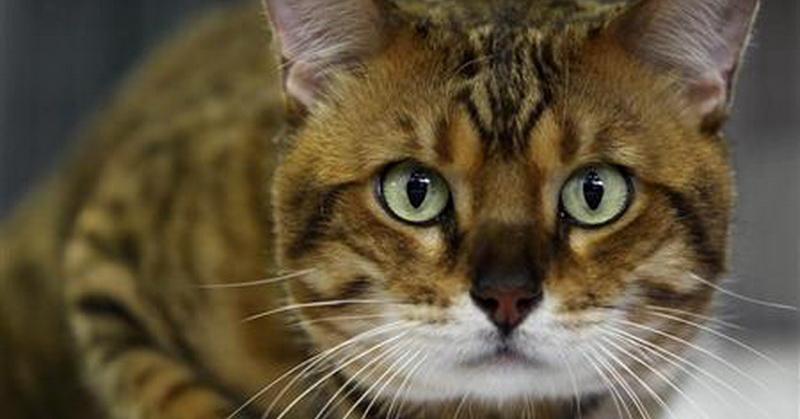 https: img-k.okeinfo.net content 2017 04 11 56 1664880 hadis-dan-sains-jelaskan-fakta-fakta-soal-kucing-vOMlAjdnXI.jpg