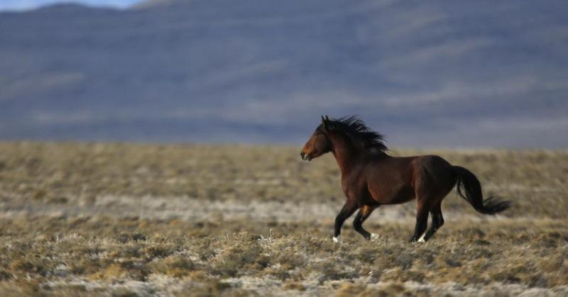 https: img-k.okeinfo.net content 2017 04 13 56 1667054 keistimewaan-kuda-dijelaskan-dalam-alquran-dan-sains-EVAU5e1eXf.jpg