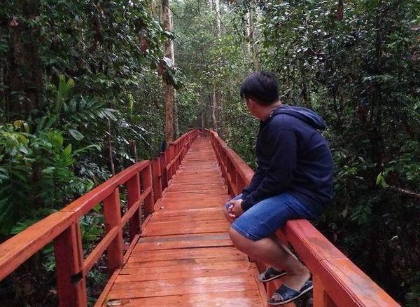 https: img-k.okeinfo.net content 2017 04 19 406 1671406 hutan-pelawan-hadirkan-sejuta-manfaat-kehidupan-di-pulau-bangka-Iv5gTh5w8A.JPG