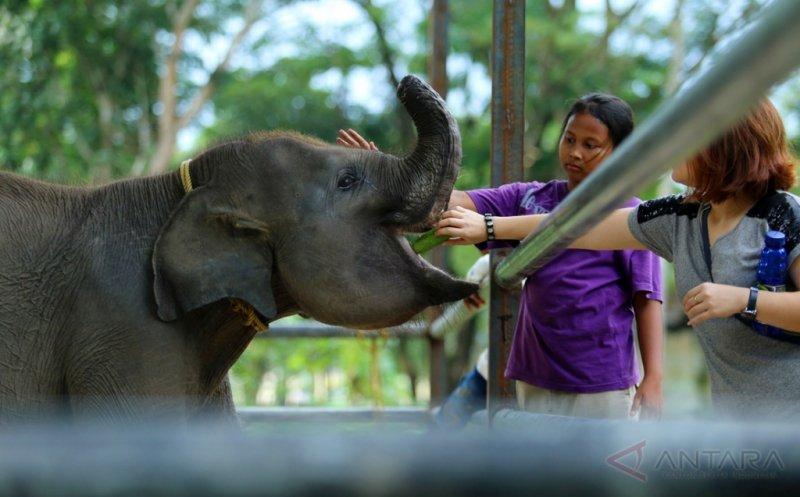 https: img-k.okeinfo.net content 2017 05 02 406 1680991 lebih-dekat-dengan-erin-anak-gajah-yang-belalainya-terpotong-akibat-dijerat-pemburu-enuK6xXzBw.jpg