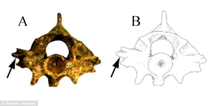 https: img-k.okeinfo.net content 2017 05 16 56 1692070 ngeri-peneliti-temukan-fosil-ular-bersayap-u1zLA25SWa.jpg