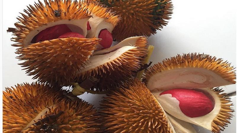 https img k.okeinfo.net content 2017 05 19 298 1694937 liburan ke banyuwangi jangan lupa cicipi durian merah nan unik ini 0TUe43Wag8.jpg