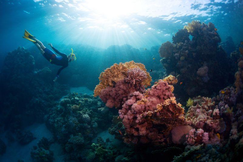https img k.okeinfo.net content 2017 05 19 406 1695052 nikmati keindahan alam bawah laut di pulau samalona UMa2KJUcS2.jpg