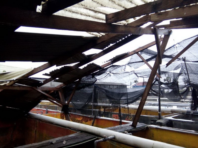 https: img-k.okeinfo.net content 2017 06 14 340 1716358 waduh-hujan-deras-dan-angin-puting-beliung-terjang-buleleng-8BvhbaZp48.jpg