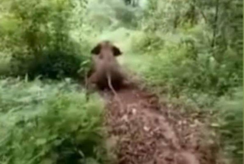 https: img-k.okeinfo.net content 2017 07 02 18 1727034 video-gemas-layaknya-manusia-anak-gajah-ini-tertangkap-kamera-main-seluncuran-9r7DS4Jl1U.jpg