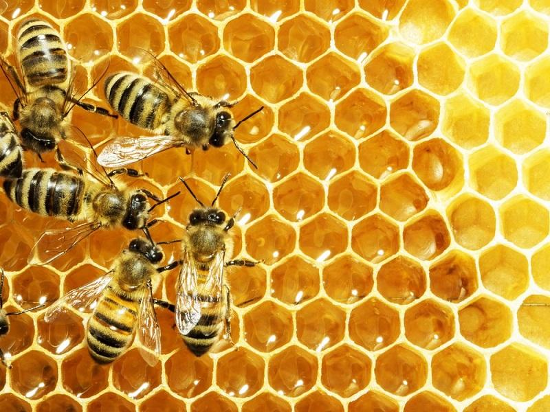 https: img-k.okeinfo.net content 2017 07 31 481 1746925 keren-mahasiswa-unair-teliti-madu-lebah-apis-dorsata-bisa-cegah-osteoporosis-4SssAx5dHX.jpg