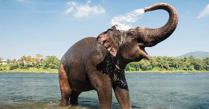 https: img-k.okeinfo.net content 2017 08 02 56 1748491 do-you-know-ternyata-gajah-satu-satunya-mamalia-yang-tak-bisa-lompat-pHXdERapnD.jpg