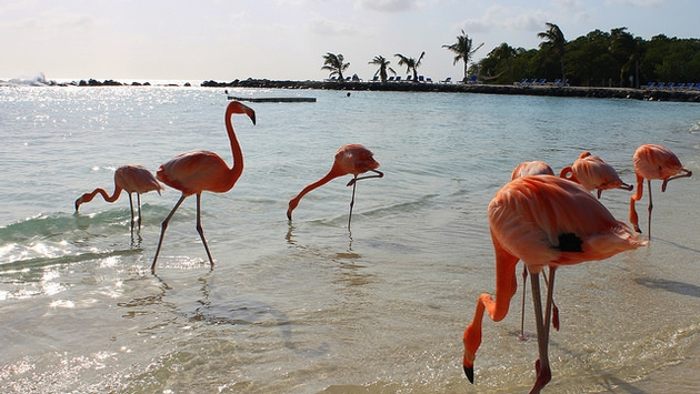 https: img-k.okeinfo.net content 2017 08 11 406 1754371 keren-di-pantai-aruba-wisatawan-bisa-bermain-air-bareng-flamingo-zN6Q2jdLdy.jpg