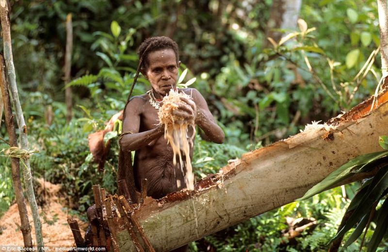 https: img-k.okeinfo.net content 2017 08 21 406 1759832 uncover-indonesia-mengulik-korowai-suku-kanibal-di-papua-yang-jadi-sorotan-dunia-YudW6XF76c.jpg