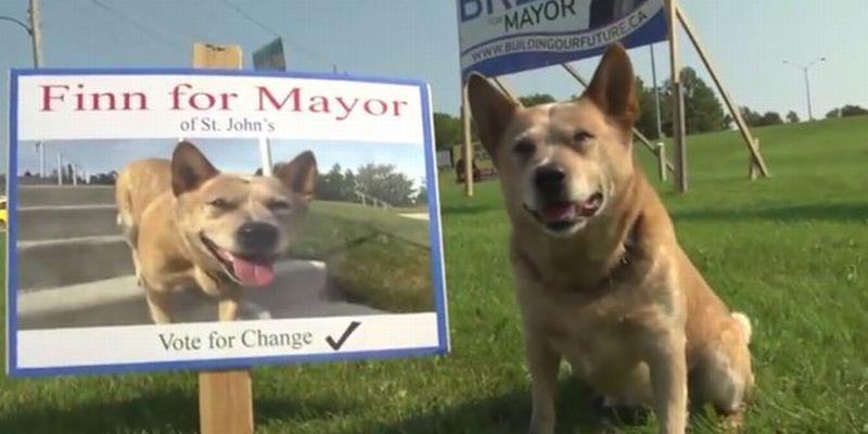https: img-k.okeinfo.net content 2017 09 14 18 1775519 mengejutkan-seekor-anjing-jadi-kandidat-wali-kota-di-kanada-NxF7RtXPBM.jpg