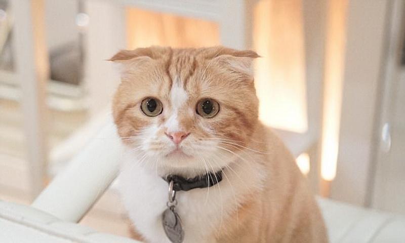 https: img-k.okeinfo.net content 2017 09 14 481 1775620 waduh-seorang-pria-tak-bisa-ereksi-setelah-dicakar-kucing-kok-bisa-F7wTsRGLtW.jpg