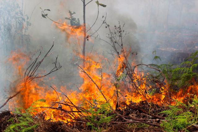 https: img-k.okeinfo.net content 2017 09 14 65 1775963 hebat-4-peneliti-ini-bisa-prediksi-kapan-terjadi-kebakaran-hutan-gambut-zl0YCyH7rw.jpg