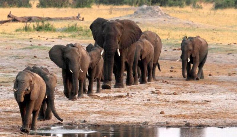 https: img-k.okeinfo.net content 2017 11 13 18 1813348 niat-bersafari-turis-belgia-dan-belanda-tewas-diinjak-gajah-di-zambia-LS4d3PnvF4.jpg
