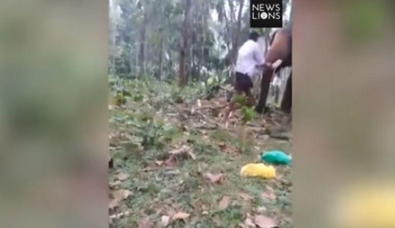 https: img-k.okeinfo.net content 2017 11 14 18 1814114 coba-panjat-tubuh-gajah-remaja-ini-dilempar-ke-udara-O0QJfgLGEf.jpg