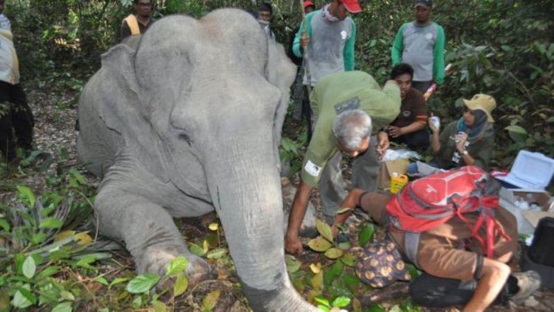 https: img-k.okeinfo.net content 2017 11 23 406 1819567 konflik-manusia-dan-gajah-masif-terjadi-di-riau-begini-tim-dokter-selamatkan-gajah-yang-terluka-RPgZj44FGr.jpg