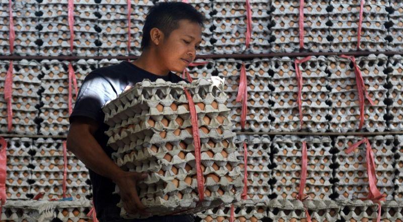 https: img-k.okeinfo.net content 2017 12 18 320 1832334 harga-ayam-dan-telur-naik-jadi-sorotan-mendag-kenaikannya-masih-dalam-batas-toleransi-5LFkB3GFPV.jpg