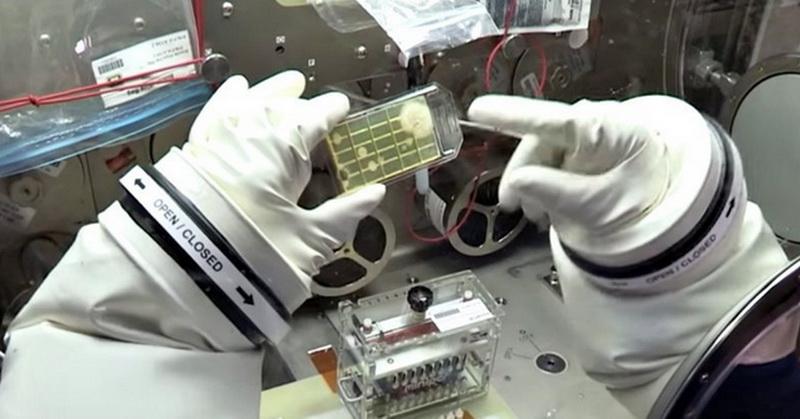 https: img-k.okeinfo.net content 2018 01 03 56 1839418 astronot-identifikasi-mikroba-di-luar-angkasa-untuk-pertama-kalinya-dUooULy513.jpg