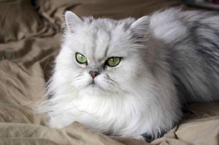 https: img-k.okeinfo.net content 2018 01 09 196 1842419 tips-memelihara-kucing-dan-anjing-buta-di-dalam-rumah-Zgx7etTxGa.jpg