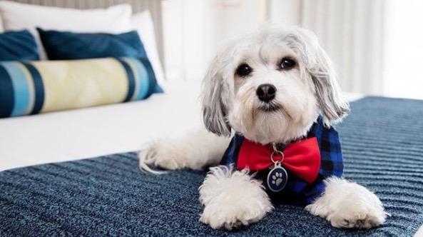 https: img-k.okeinfo.net content 2018 01 10 406 1842726 intip-kamar-hotel-berbintang-khusus-tempat-menginap-anjing-peliharaan-Jn5Zu8GtPh.jpg