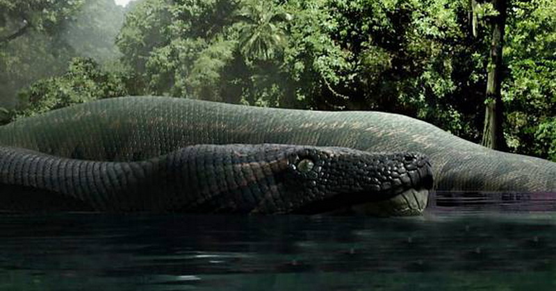 https: img-k.okeinfo.net content 2018 01 10 56 1843156 ular-raksasa-panjang-15-meter-hidup-di-hutan-hujan-tropis-vtLaSstUDa.jpg