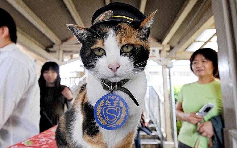 https: img-k.okeinfo.net content 2018 01 11 196 1843784 kisah-haru-kucing-tama-si-penjaga-stasiun-di-jepang-yang-telah-tiada-39NQbyLAPh.jpg