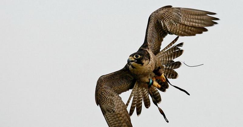 https: img-k.okeinfo.net content 2018 01 11 56 1843760 berburu-mangsa-elang-paria-bikin-kebakaran-hutan-jG5Ez2fFvT.jpg