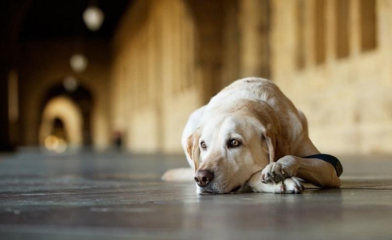 https: img-k.okeinfo.net content 2018 01 12 196 1844026 komunitas-berjiwa-mulia-selamatkan-nyawa-anjing-liar-dalam-bahaya-jSHWJL64dC.jpg