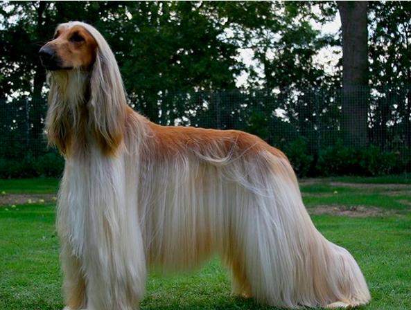 https: img-k.okeinfo.net content 2018 01 12 196 1844049 jenis-jenis-anjing-yang-mungkin-belum-anda-ketahui-gTwxyHbutH.png