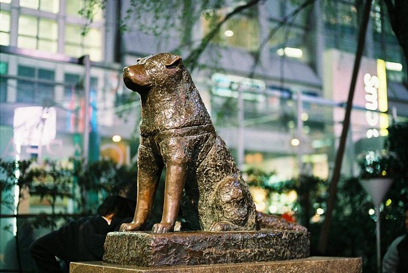 https: img-k.okeinfo.net content 2018 01 12 196 1844139 kisah-sedih-hachiko-anjing-setia-penunggu-stasiun-shibuya-wpogxp1pnM.jpg