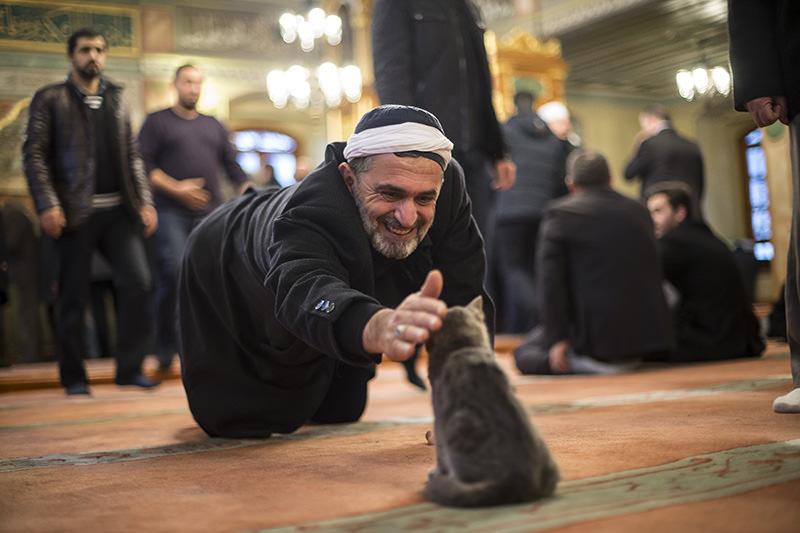 https: img-k.okeinfo.net content 2018 01 12 196 1844230 keistimewaan-kucing-hewan-kesayangan-rasulullah-saw-3XYeAFftH3.jpg