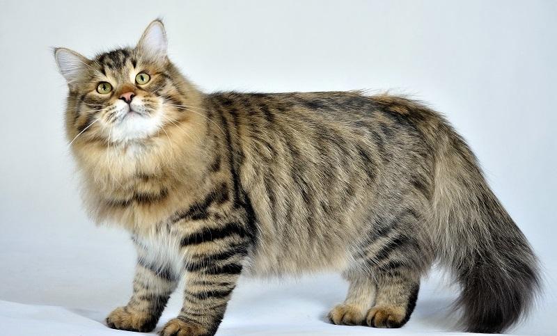 https: img-k.okeinfo.net content 2018 01 12 196 1844266 10-jenis-kucing-lucu-nan-menggemaskan-yang-cocok-dijadikan-peliharaan-G2had0nHRY.jpg