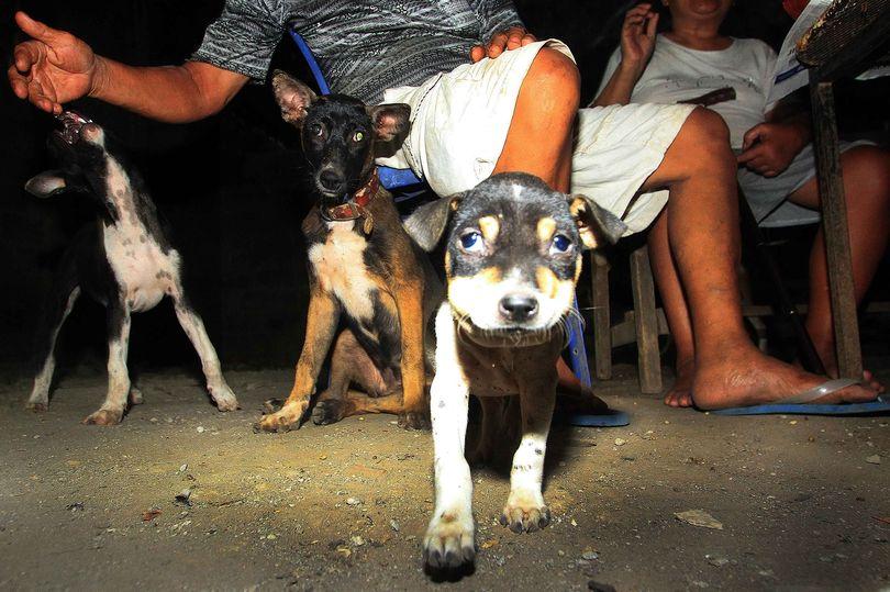 https: img-k.okeinfo.net content 2018 01 12 298 1844078 dibunuh-dengan-disiksa-segera-tandatangani-petisi-stop-konsumsi-daging-anjing-di-seluruh-indonesia-tiECmBRU1p.jpg