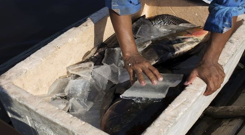 https: img-k.okeinfo.net content 2018 01 14 320 1844804 kinerja-perikanan-nasional-melambat-nelayan-minta-tata-kelola-dibenahi-sHBcHszEVX.jpg