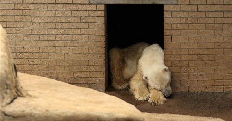 https: img-k.okeinfo.net content 2018 02 04 56 1854408 perubahan-iklim-pengaruhi-populasi-beruang-kutub-nhfycHjBLE.jpg