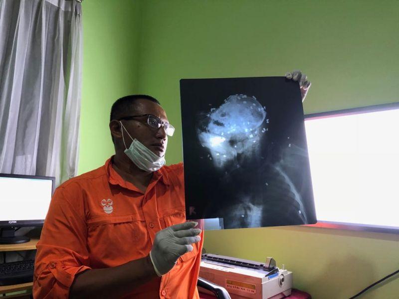 https: img-k.okeinfo.net content 2018 02 07 340 1855928 sadis-orangutan-mati-akibat-ditembus-130-peluru-7U9otQrToe.jpg