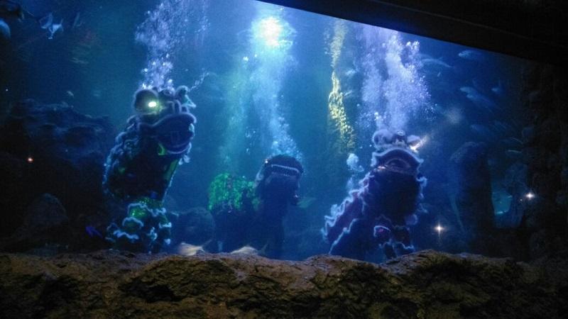 https: img-k.okeinfo.net content 2018 02 12 406 1858493 meriahkan-imlek-liong-dan-barongsai-siap-beraksi-dalam-akuarium-besar-ancol-y2YDOBvStW.jpg
