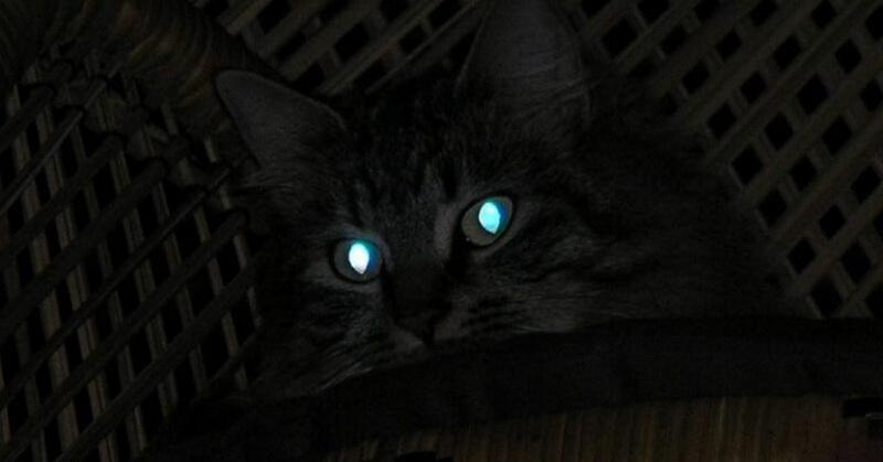 https: img-k.okeinfo.net content 2018 02 12 56 1858587 mengapa-mata-kucing-menyala-di-malam-hari-T8Kt4XMYd5.jpg