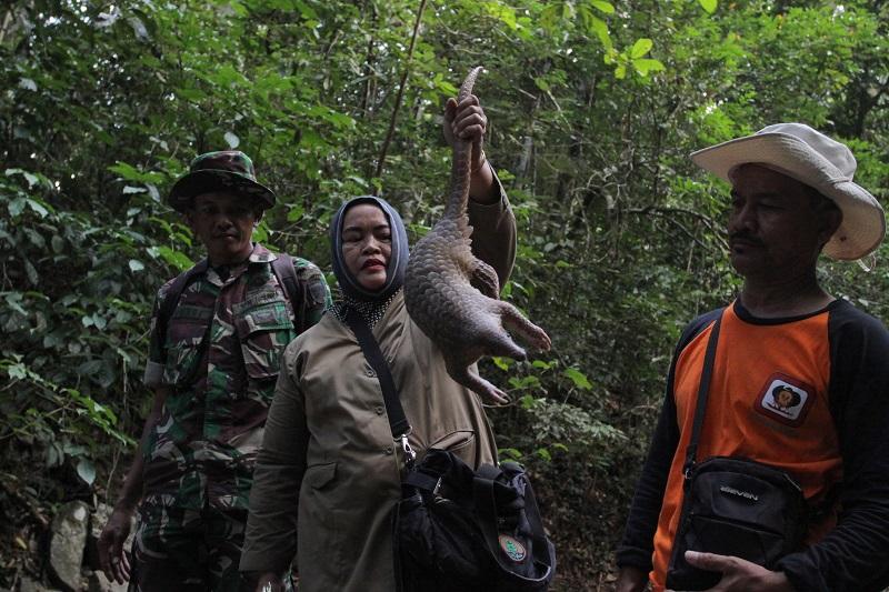 https: img-k.okeinfo.net content 2018 02 14 406 1859565 3-satwa-yang-diamankan-dari-warga-dilepasliarkan-di-hutan-aceh-uKSKZ1KsEy.jpg