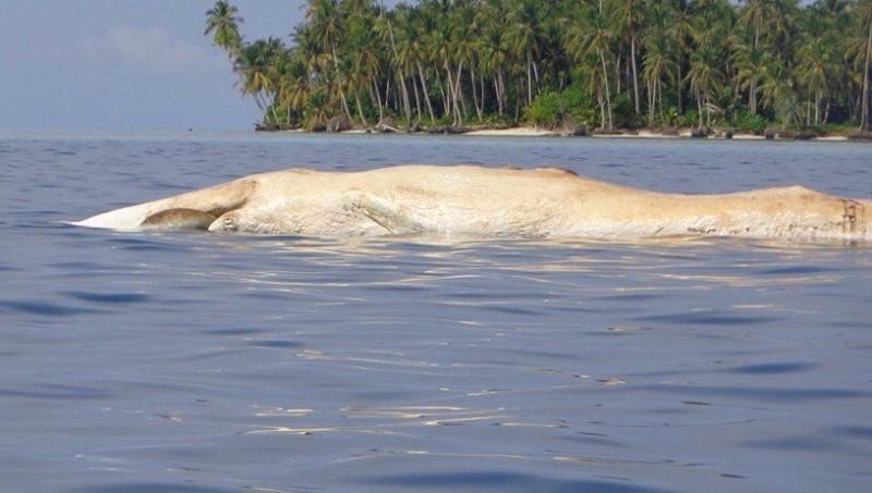 https: img-k.okeinfo.net content 2018 02 20 340 1861835 paus-sepanjang-7-meter-ditemukan-mati-di-pulau-banyak-aceh-v8m9Wgj2Ts.jpg