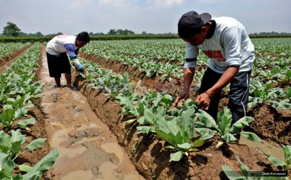 https: img-k.okeinfo.net content 2018 03 10 340 1870645 sekda-belitung-timur-kaget-area-bekas-tambang-disulap-jadi-lahan-pertanian-jBgwJ2t2DH.jpg