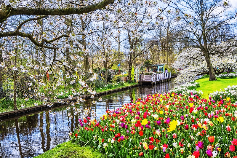 https: img-k.okeinfo.net content 2018 03 13 406 1872238 menikmati-keindahan-surganya-bunga-tulip-di-keukenhof-belanda-7keD6qdxko.jpg