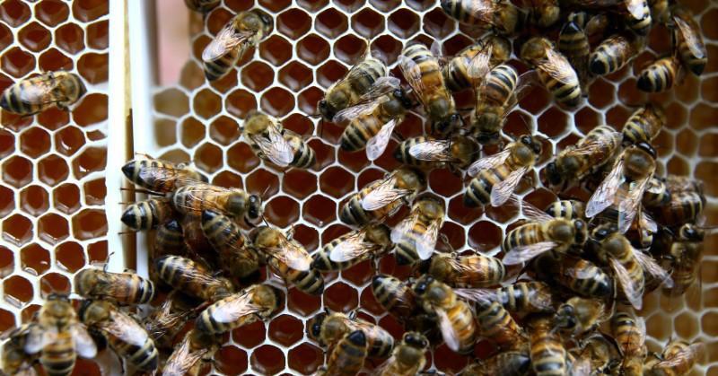 https: img-k.okeinfo.net content 2018 03 21 56 1876141 organ-tubuh-ini-tersembunyi-dalam-sistem-pencernaan-manusia-hingga-5-hal-menarik-tentang-lebah-nbgjDPbbcZ.jpg