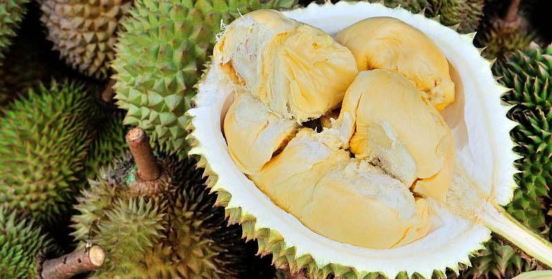 https: img-k.okeinfo.net content 2018 04 02 481 1880792 di-balik-rasanya-yang-lezat-yuk-kenali-6-fakta-kesehatan-tentang-durian-ZYazB4TF19.jpg